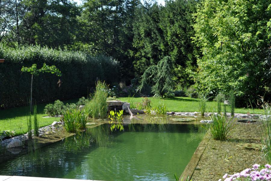 Domaci-plavalni-ribnik